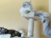 Škrabadla pro kočky můžete mít doma i venku
