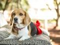 Základy péče o budoucí psí maminku